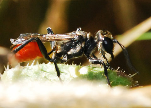 Bộ sưu tập côn trùng 2 - Page 5 Aa_6046