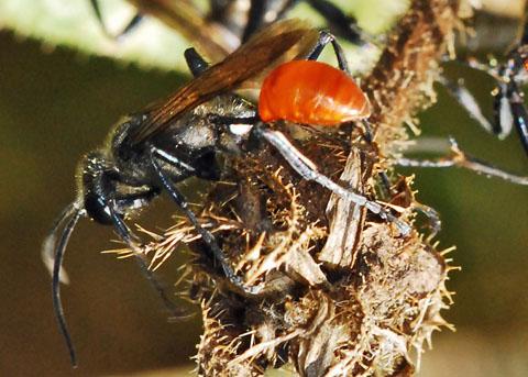 Bộ sưu tập côn trùng 2 - Page 5 Aa_6047