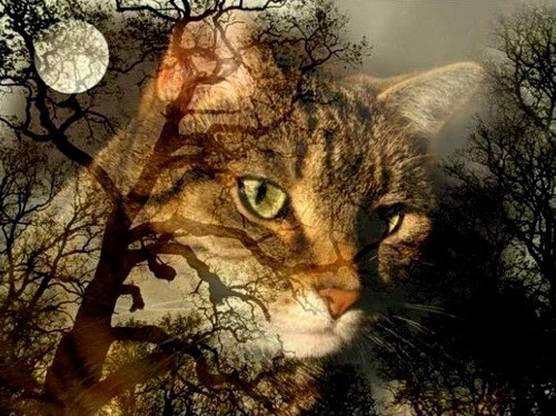 Магия кошек Cat_provi_01