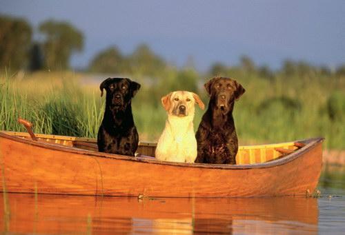 Собаки, которые не поддаются дрессировке Head