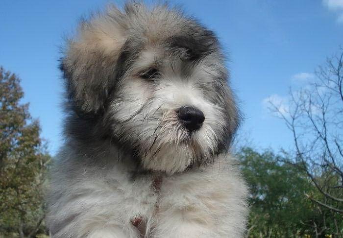 Породы собак: зачем так много? Breeds_why_05