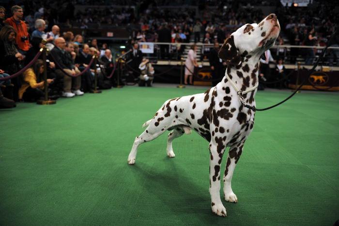 Породы собак: зачем так много? Breeds_why_06