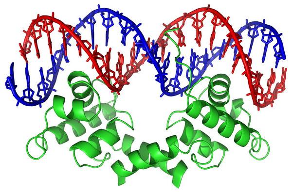 История открытия молекулы ДНК Dna_history_05