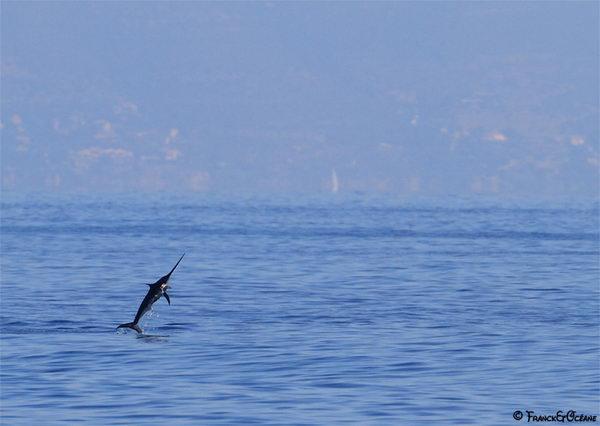 Рыба меч Swordfish_01
