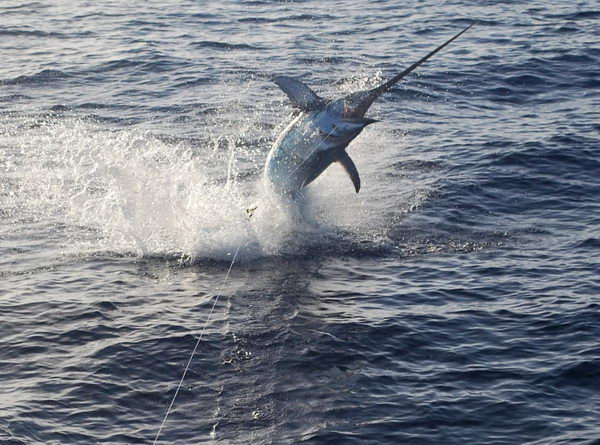 Рыба меч Swordfish_04
