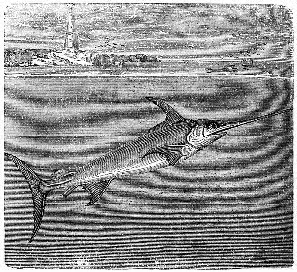 Рыба меч Swordfish_05
