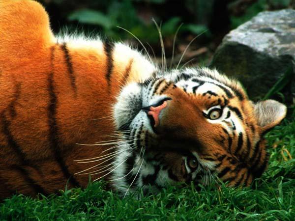 I životinje odmaraju - Page 2 0e9d301833_70303918_o2