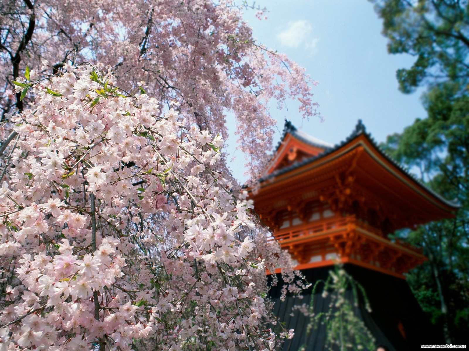 Les bons plans & Voyages au Japon 1297698744_126_www.nevseoboi.com.ua
