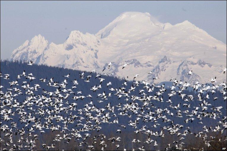 هجرة الطيور وكيفية معرفة وجهتها _46898226_008407175-1
