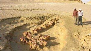 Valle  de las ballenas -Wadi Al-Hitan _48554869_pdg20050233-1