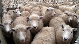 Seguimiento de enfermedades,  pandemias  etc. que afectan al mundo en estos momentos   _54762592_sheepap