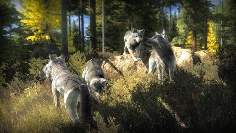 Actualización del estado 12/12/16 Grey_wolf