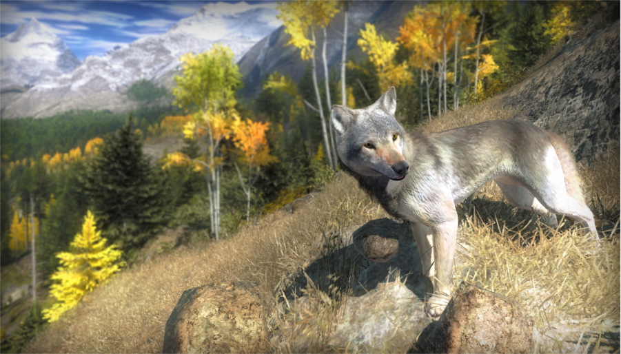 Notas de diseño del lobo Wolf_sc3