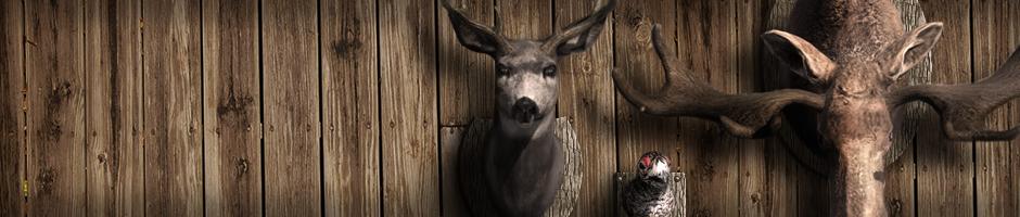 Introducción del nuevo sistema de Hunter Score Species_3