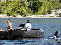 Луна - дух косатки / Luna: Spirit of the Whale (Канада, 2007) _40290145_luna_story_ap