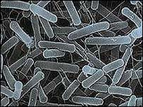 حمى التايفوئيد typhoid fever _40675691_salmonella203