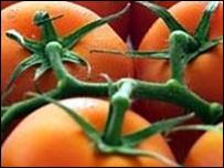 عقار مستخلص من الطماطم يقي من أمراض القلب _45853594_tomatos_203