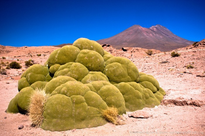 Самые интересные представители флоры нашей планеты - Страница 2 %D0%AF%D1%80%D0%B5%D1%82%D0%B0-1-700x466