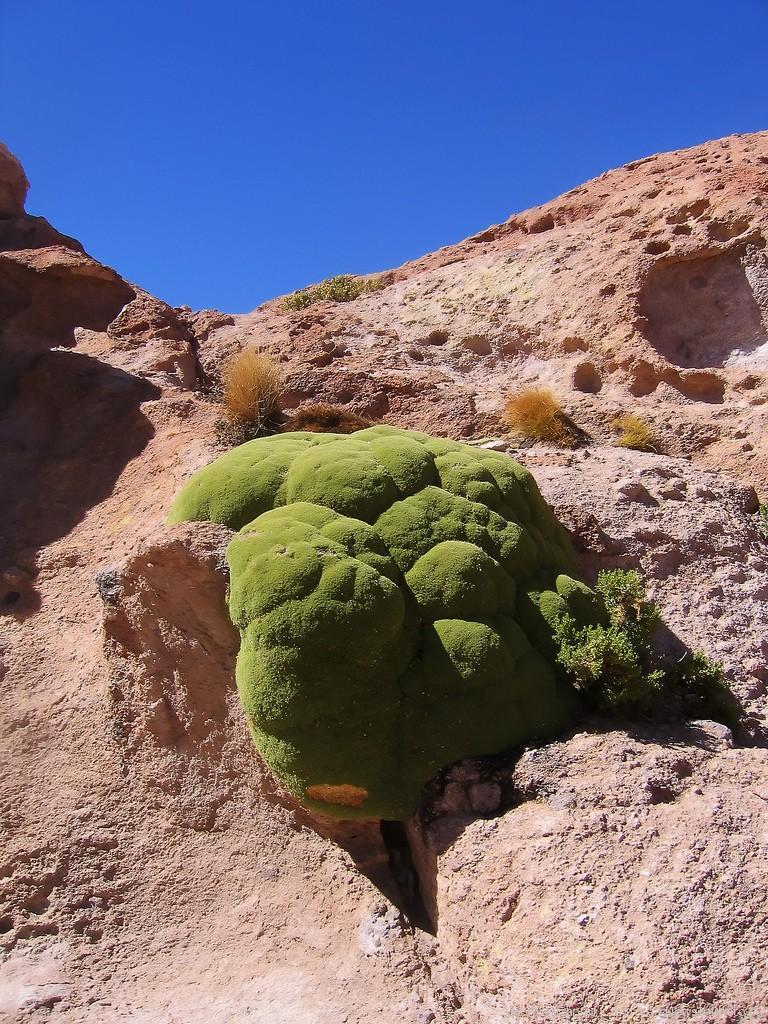Самые интересные представители флоры нашей планеты - Страница 2 %D0%AF%D1%80%D0%B5%D1%82%D0%B0-6