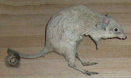 Animal de ptit loulou - 7 décembre trouvé par Lolo Mbettongia