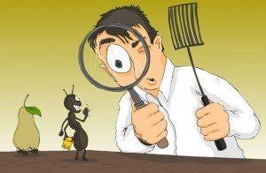 شركة مكافحة حشرات بالرياض Ant-article-23-10-12-300x196