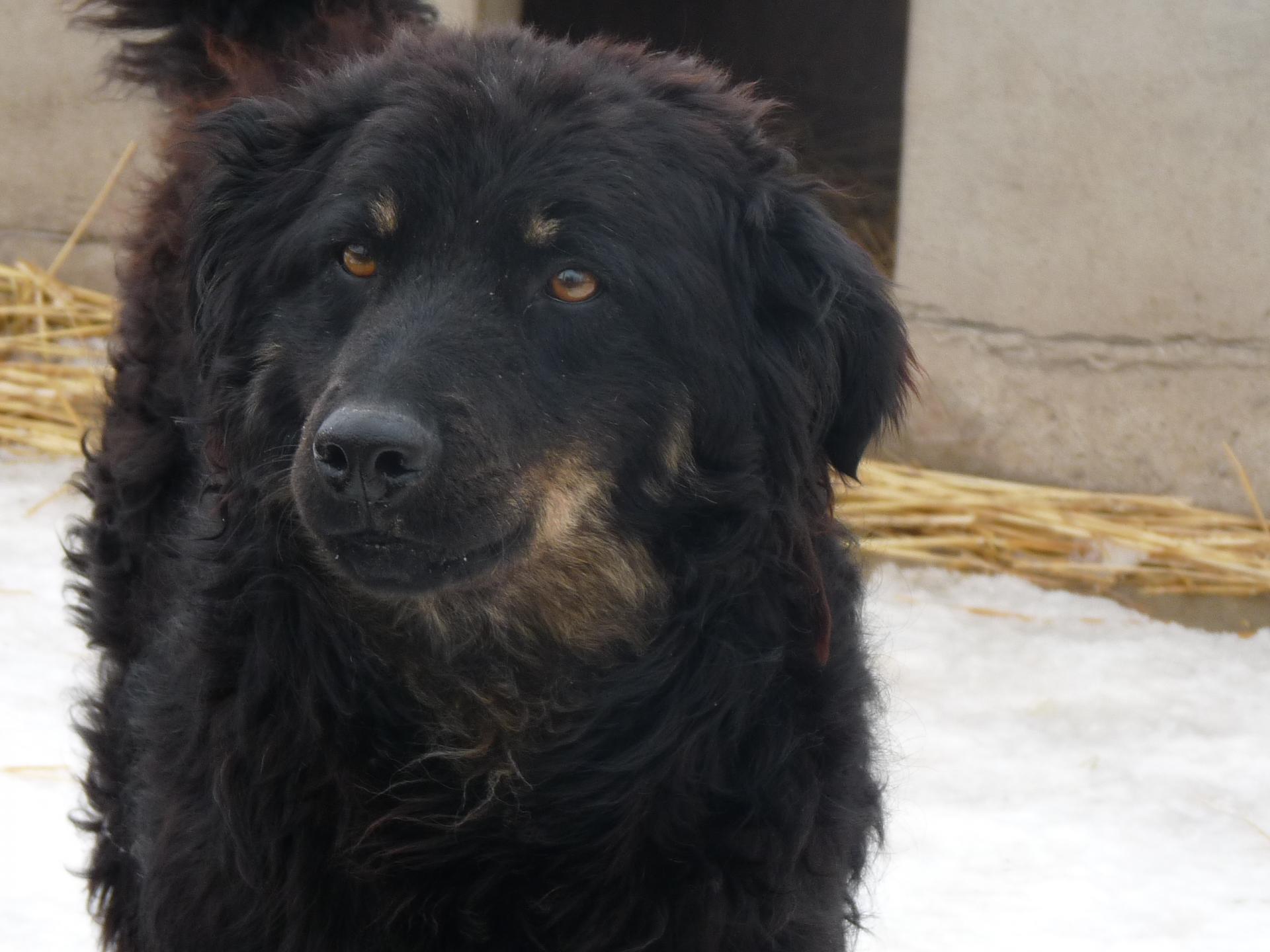 MELINA - x mudi 5 ans - (5 ans de refuge) Asso Nobodys dog - Becej (Serbie) Melina-7--1