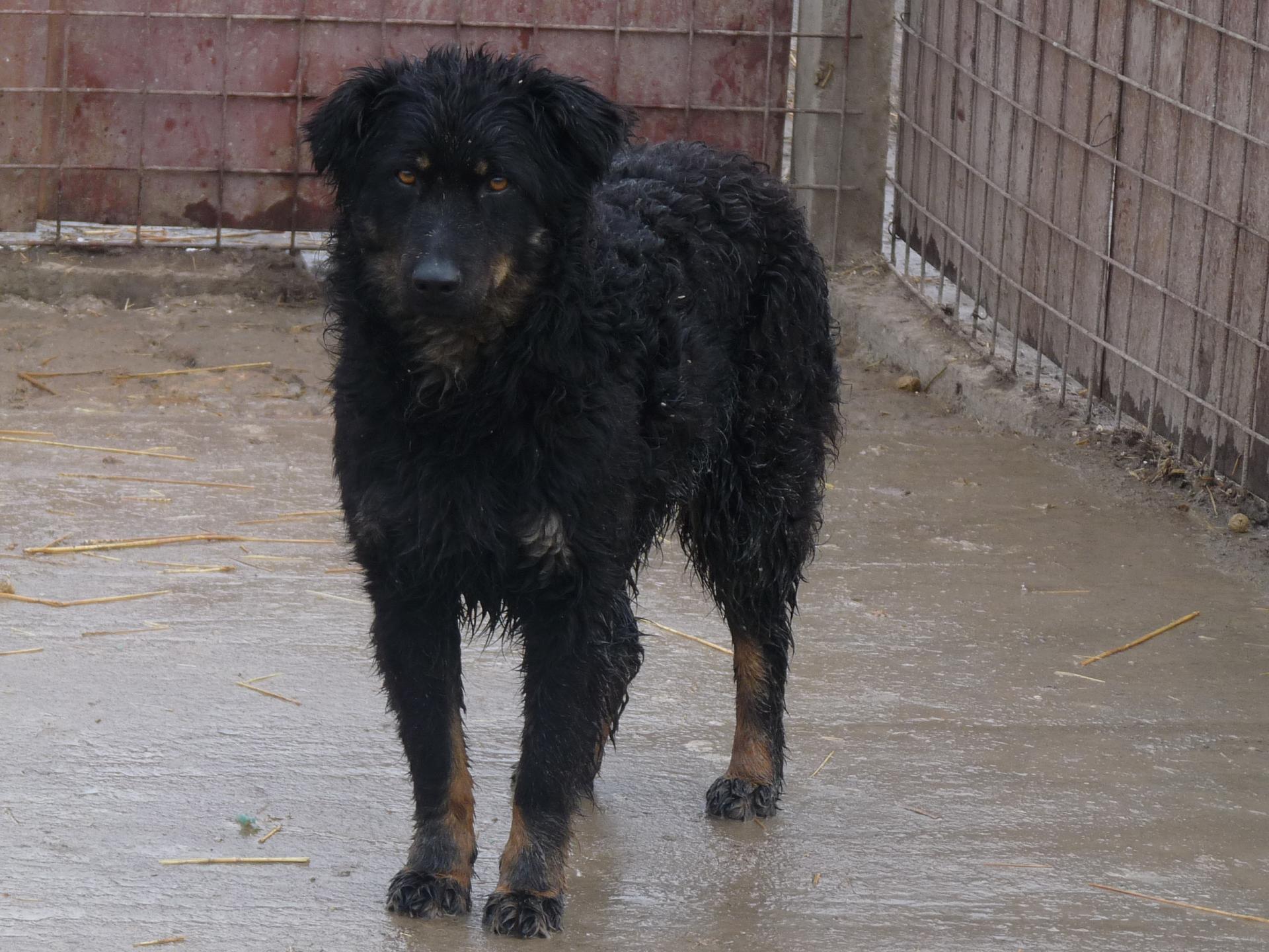 MELINA - x mudi 5 ans - (5 ans de refuge) Asso Nobodys dog - Becej (Serbie) P1780252