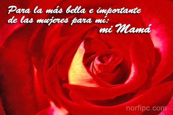 Para ti MAMA Para-mama-la-mas-bella
