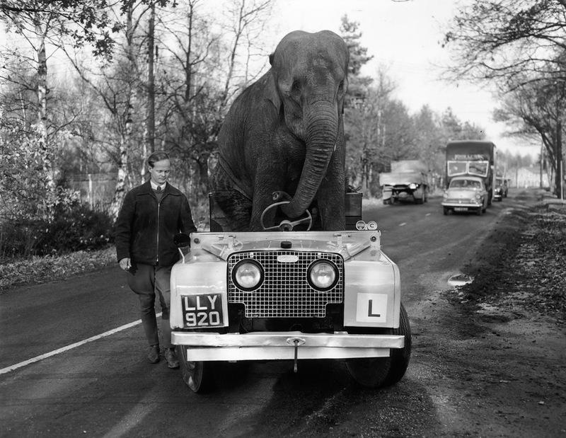 Kam el elefante y su Land Rover Kam_elefante_Land_Rover_noviembre_1959