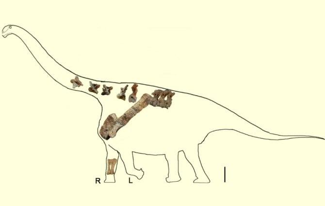 Descubierta una nueva especie de titanosaurio en China Img_18270