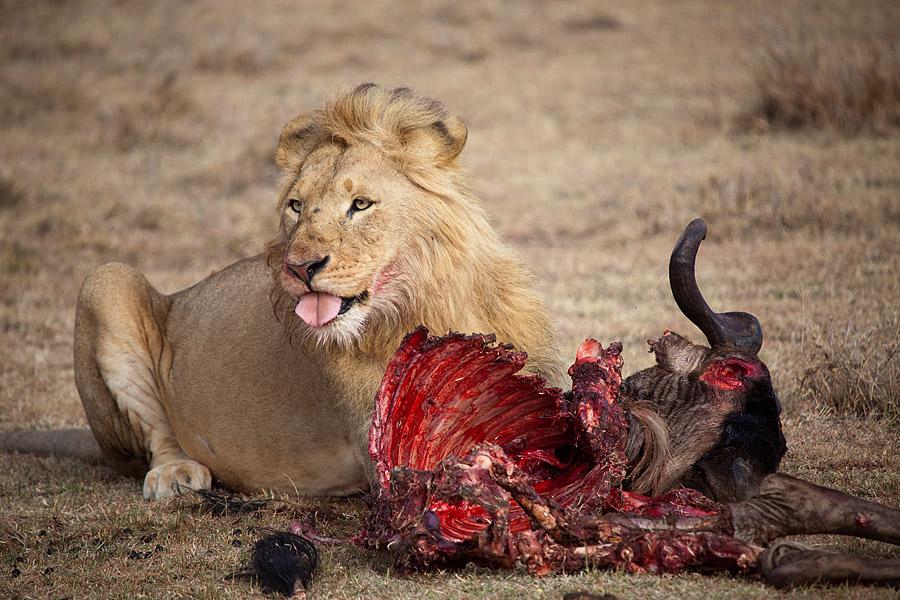 Il y a beaucoup de progès à faire dans le respect des animaux. MG_7577