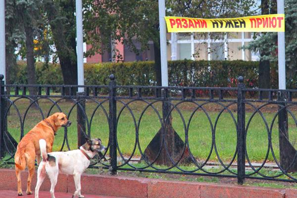 В Рязани прошёл митинг с требованием создать приют для бездомных животных вместо их уничтожения Mit%2008