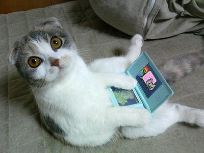 La collec' du chat perché  Cat-playing-nyan-cat-nintendo-game-large