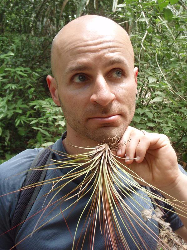 """Blaireau"" 100% d'origine végétale ? 20090304-1229-P3OTO--Guatemala--2171--Tikal--Plant-Beard--Geoff"