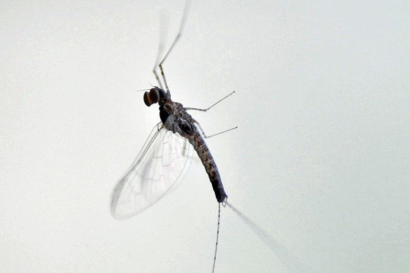 petit insecte à identifier Dsc_7811-2