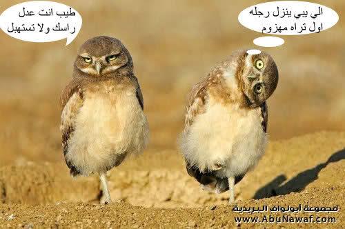 اضحك من قلبك !!!! 6gar8zn