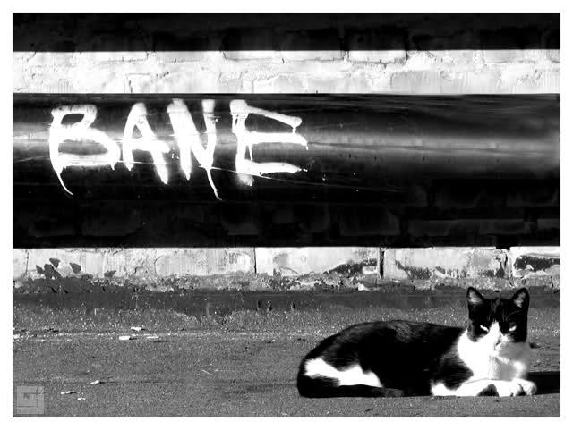 Crno-bela fotografija - Page 3 335f3uq