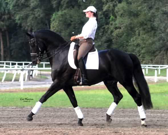 Konji 30wtmix