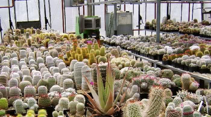 Visit to Collection Helmut Rogozinski 17-05-2008 2130imr