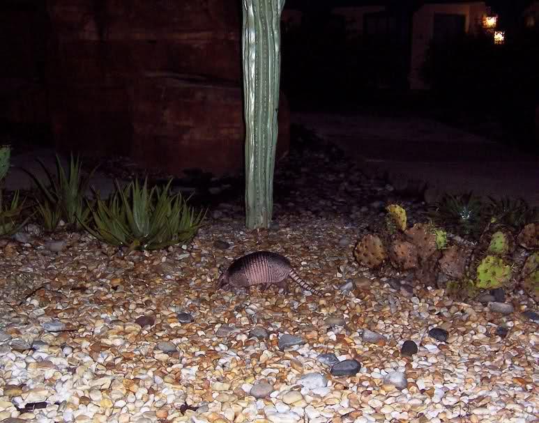 Critters of Coronado 2u8jodd