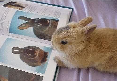 Najslađe životinje na svijetu - Page 2 24zelmr
