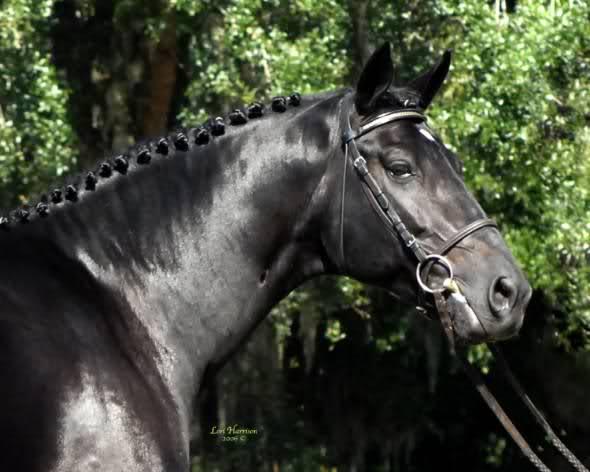Konji 35i0unr