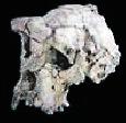 Evolución Humana: Especies de la Subfamilia Homininae que habitaron en el Mioceno