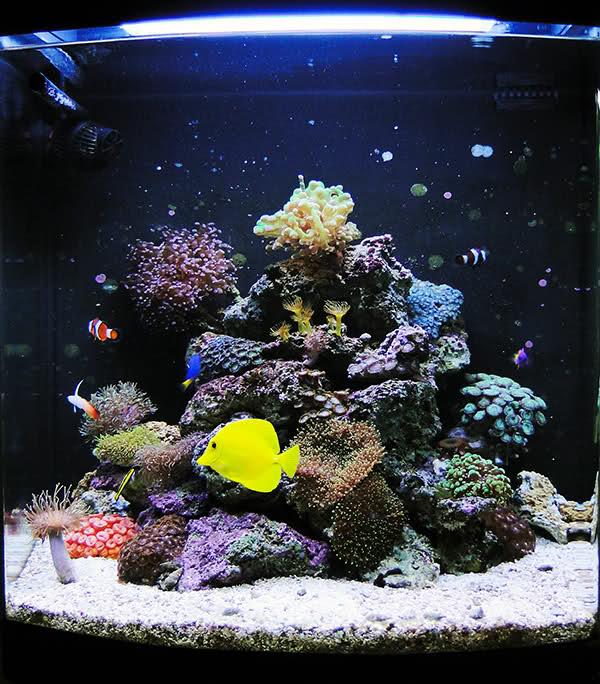SERA Biotop 130 Nano Reef - LPS e Moles 35k3asl