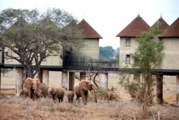 Sarova Salt Lick Game Lodge Sbovmt