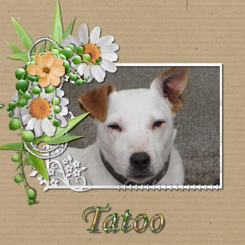 TATOO (croisé Jack Russel mâle) Ws8qkl