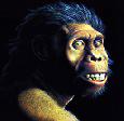 Evolución Humana: Género Homo