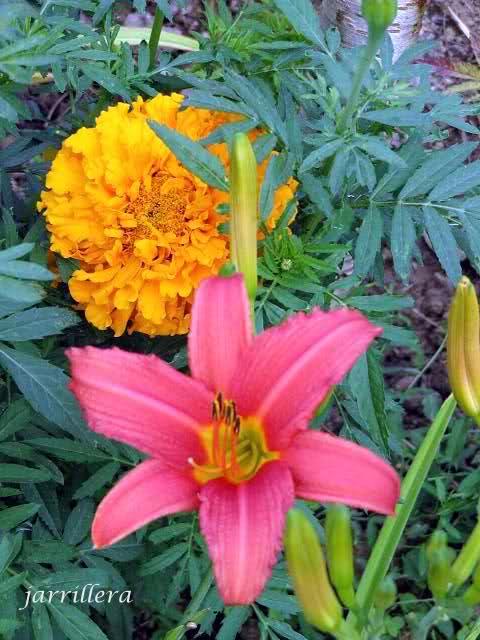 De semillas a futuras plantas 1zqfqfn