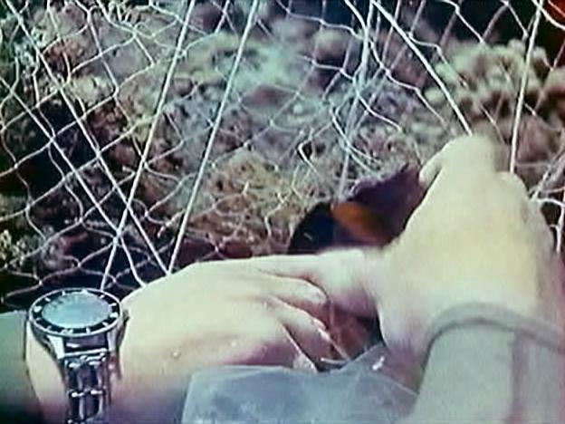 """quelles sont ces montres de l'épopée """"Cousteau"""".. 2egh6hy"""