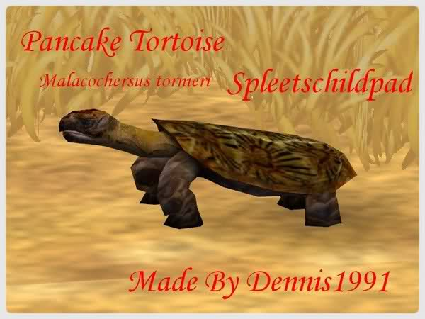 Topics tagged under tortoise on User - Made Creations 302c178
